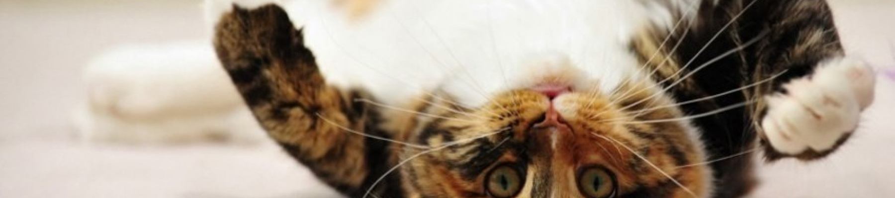 upside-down-cat-facebook-cover-timeline-banner-for-fb.jpg
